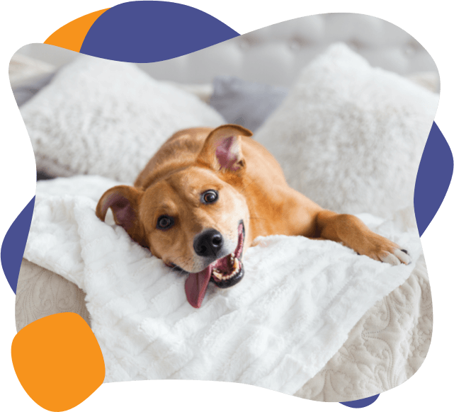 A dog lies on a bed with its tongue out