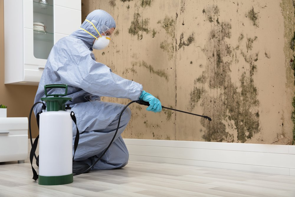 ottawa mould remediation pros cleaning room