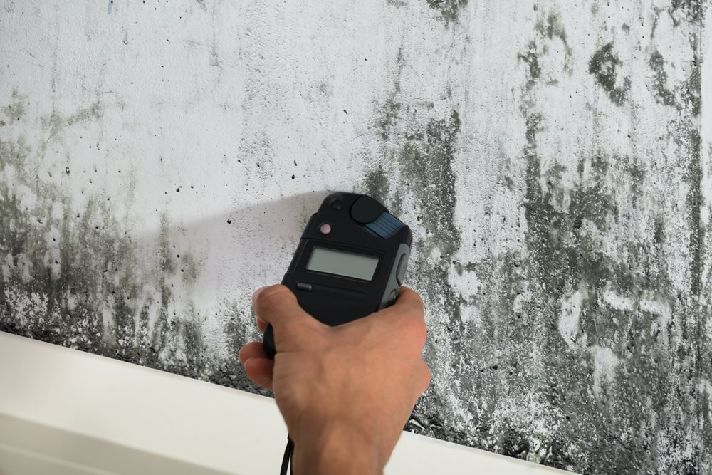 a cleaning professional testing for mould on a dirty looking wall