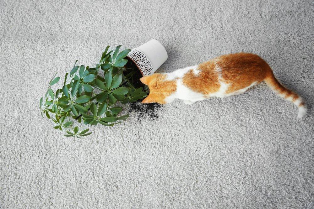 bad cat soils carpet at home